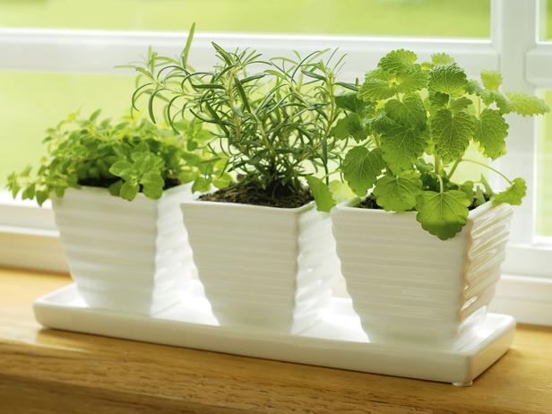 Istock 4787386 herbs on kitchen windowsill s4x3 lg